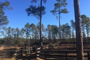 Evergreen Training Center and Equestrian Complex in Kershaw, SC (29 of 96)