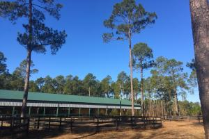 Evergreen Training Center and Equestrian Complex in Kershaw, SC (34 of 96)