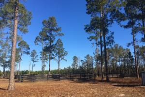 Evergreen Training Center and Equestrian Complex in Kershaw, SC (64 of 96)