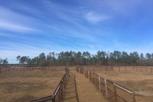 Evergreen Training Center and Equestrian Complex in Kershaw, SC (77 of 96)