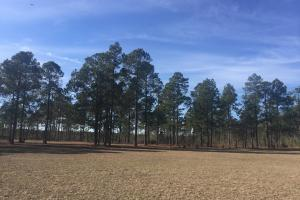 Evergreen Training Center and Equestrian Complex in Kershaw, SC (4 of 96)