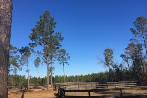 Evergreen Training Center and Equestrian Complex in Kershaw, SC (39 of 96)