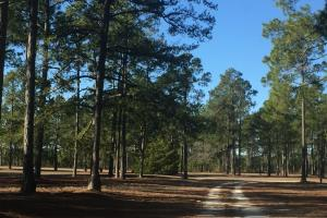 Evergreen Training Center and Equestrian Complex in Kershaw, SC (28 of 96)