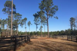 Evergreen Training Center and Equestrian Complex in Kershaw, SC (32 of 96)