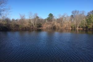 Copperas Branch Recreational & Pasture Tract - Morgan County AL