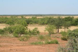 Cattle and Hunting Property - Cottle County TX