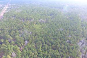 Shaw Highway 57+/- Acres in Pender, NC (6 of 13)
