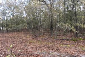 Shaw Highway 57+/- Acres in Pender, NC (10 of 13)