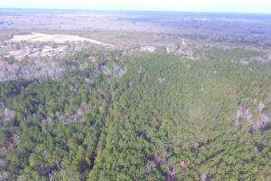 Shaw Highway 57+/- Acres in Pender, NC (8 of 13)