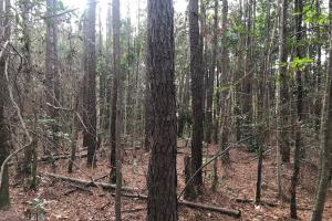 Shaw Highway 57+/- Acres in Pender, NC (11 of 13)