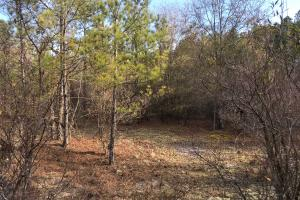 Shaw Highway 57+/- Acres in Pender, NC (3 of 13)