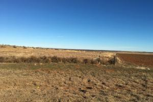 Cattle and Quail Property in Cottle, TX (2 of 6)
