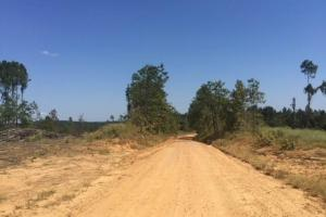 140 Acres Freshly Harvested Timber Land - Grenada County MS
