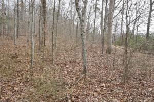 Garvin Road Timber and Hunting Investment - Chattooga County GA