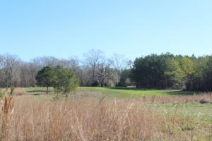 The Pinchony Creek Farm in Lowndes, AL (28 of 31)