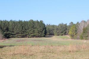 The Pinchony Creek Farm in Lowndes, AL (9 of 31)