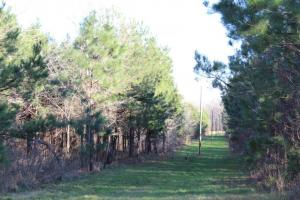 The Pinchony Creek Farm in Lowndes, AL (24 of 31)