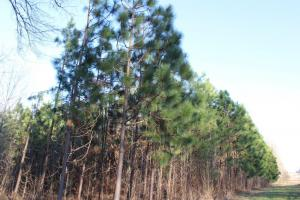 The Pinchony Creek Farm in Lowndes, AL (8 of 31)