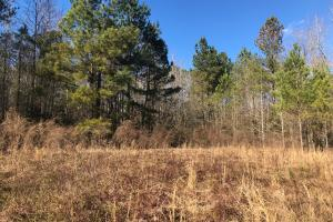 Long Branch Hunting Property - Barnwell County SC