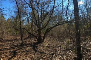 Rolling Oaks 8 Acre Homesite