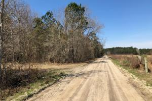 Marion Agricultural Investment Property  in Marion, SC (4 of 12)