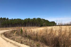 Marion Agricultural Investment Property  in Marion, SC (2 of 12)