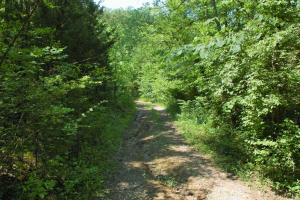 tn recreational land, timber investment tennessee (12 of 16)