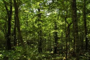 tn recreational land, timber investment tennessee (14 of 16)
