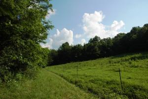 tn land for sale, farm land for sale, acreage for sale (9 of 14)