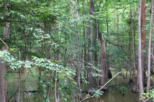 Riverfront Hunting & Farmland with Ponds in Lee, SC (10 of 24)