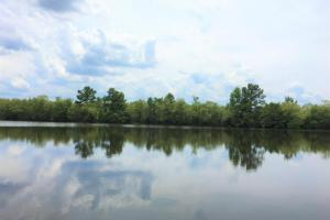 Riverfront Hunting & Farmland with Ponds in Lee, SC (4 of 24)