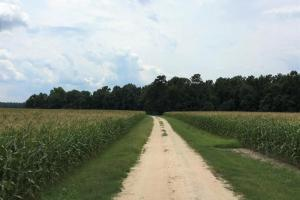 Riverfront Hunting & Farmland with Ponds in Lee, SC (3 of 24)
