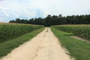 Riverfront Hunting & Farmland with Ponds in Lee, SC (15 of 24)