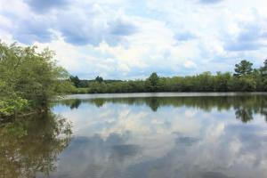 Riverfront Hunting & Farmland with Ponds in Lee, SC (2 of 24)