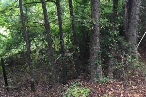 Utica 40 acre Hunting & Timber - Hinds County MS