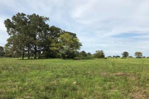 Cattle and Horse Farm with Hunting Near Jackson  - Copiah County MS