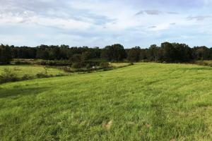 more pastureland views (10 of 17)