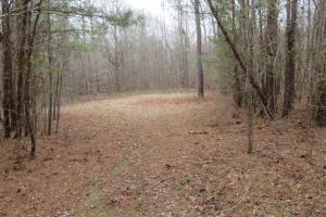 Small food plot area (13 of 15)