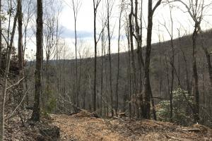 Alexander County Timber and Hunting Tract in Alexander, NC (12 of 44)