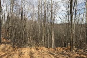 Alexander County Timber and Hunting Tract in Alexander, NC (32 of 44)