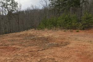 Alexander County Timber and Hunting Tract in Alexander, NC (31 of 44)