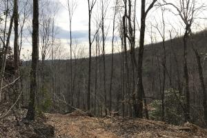 Alexander County Timber and Hunting Tract in Alexander, NC (36 of 44)