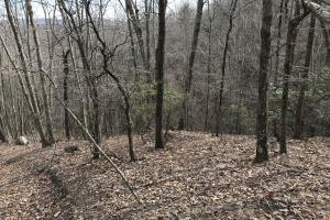 Alexander County Timber and Hunting Tract in Alexander, NC (35 of 44)