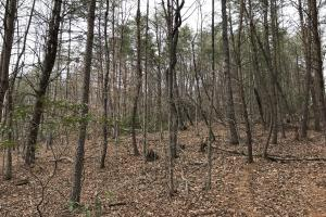 Alexander County Timber and Hunting Tract in Alexander, NC (11 of 44)