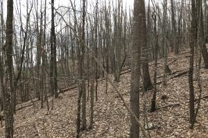 Alexander County Timber and Hunting Tract in Alexander, NC (24 of 44)