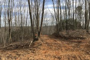 Alexander County Timber and Hunting Tract in Alexander, NC (1 of 44)