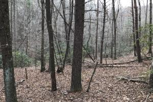 Alexander County Timber and Hunting Tract in Alexander, NC (5 of 44)