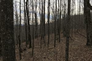 Alexander County Timber and Hunting Tract in Alexander, NC (21 of 44)