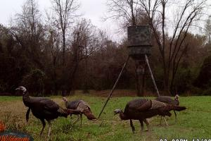 Bogue Homa Creek Camp and Hunting Tract - Perry County MS