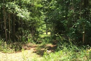 Autauga County 116 acre Home/Hunting/Rec Tract in Autauga, AL (12 of 15)
